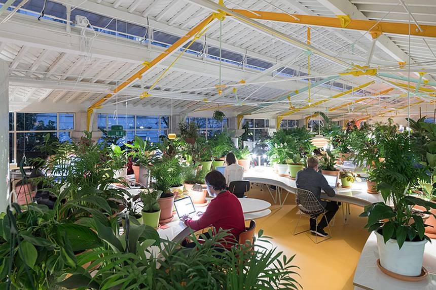 Another popular addition to the list of coworking trends is incorporating nature into coworking spaces.